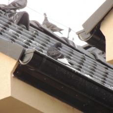 Ochrana proti holubom